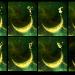 moonstall