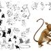 03_tarsier